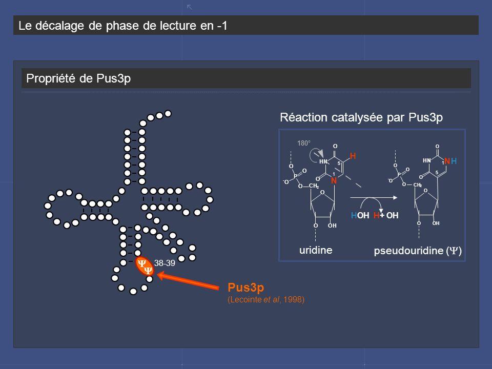 Réaction catalysée par Pus3p