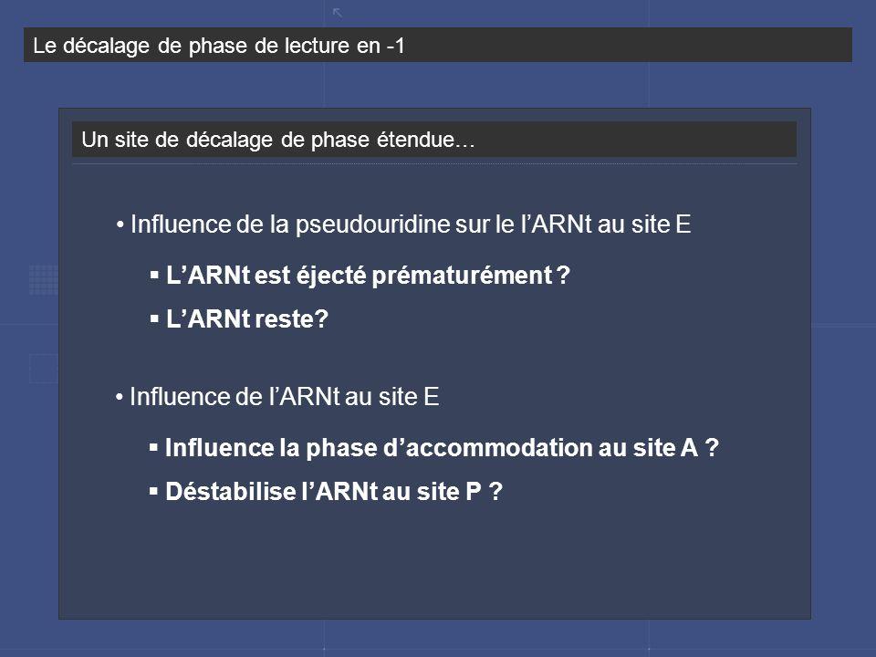 Influence de la pseudouridine sur le l'ARNt au site E