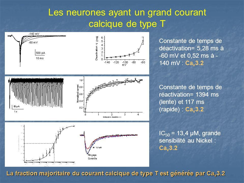 Les neurones ayant un grand courant calcique de type T
