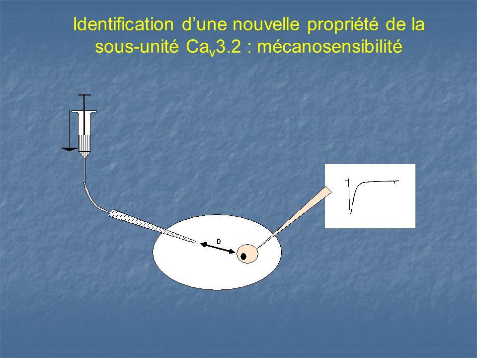 Identification d'une nouvelle propriété de la sous-unité Cav3