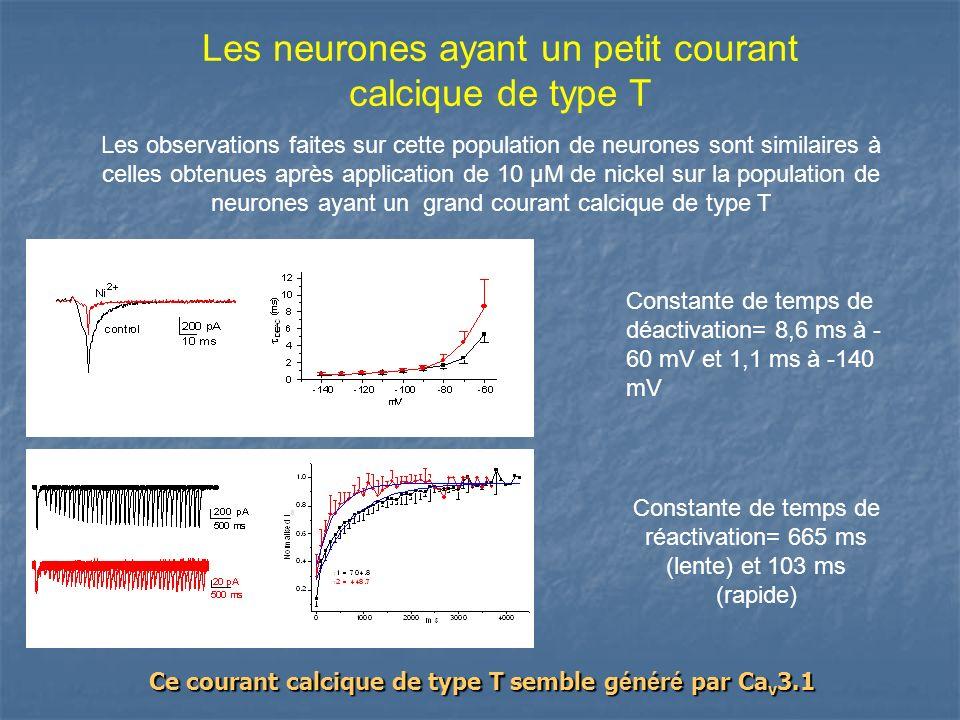 Les neurones ayant un petit courant calcique de type T