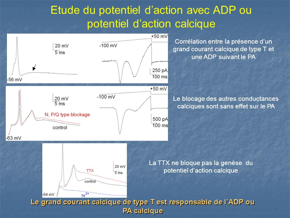 Etude du potentiel d'action avec ADP ou potentiel d'action calcique
