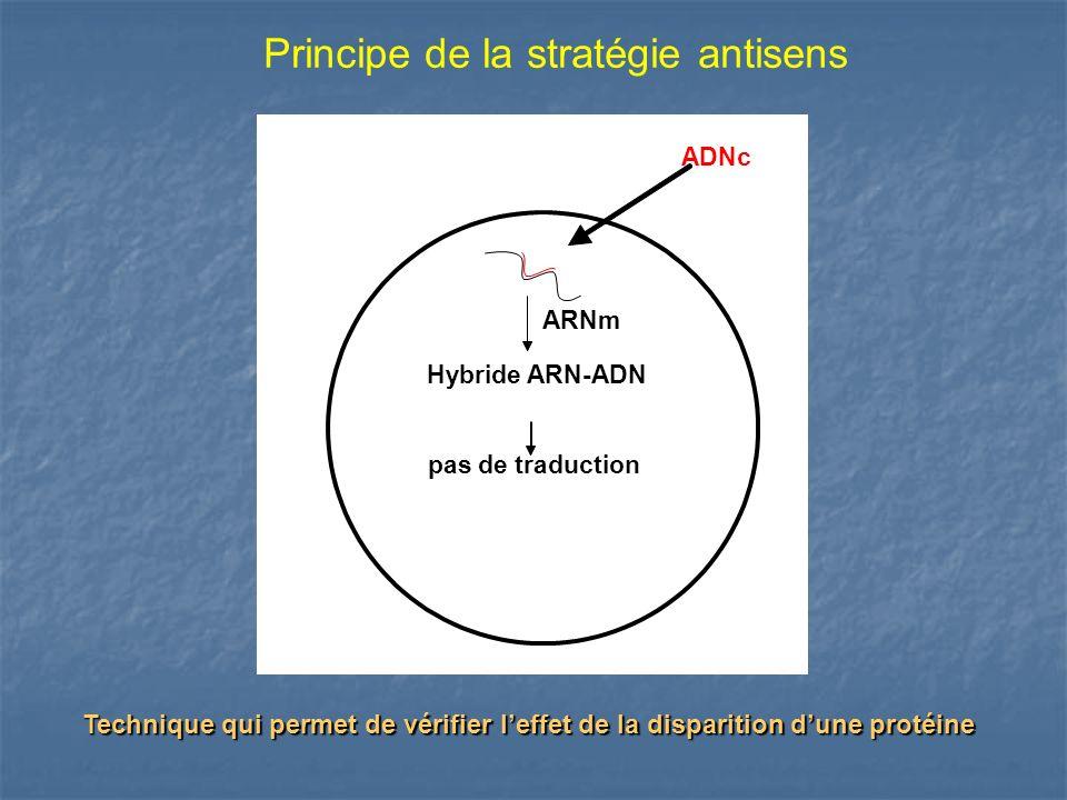Principe de la stratégie antisens
