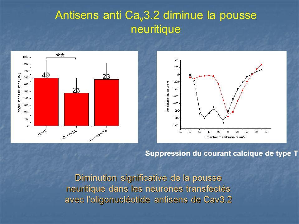 Antisens anti Cav3.2 diminue la pousse neuritique