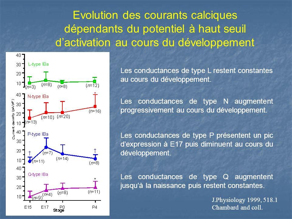 Evolution des courants calciques dépendants du potentiel à haut seuil d'activation au cours du développement