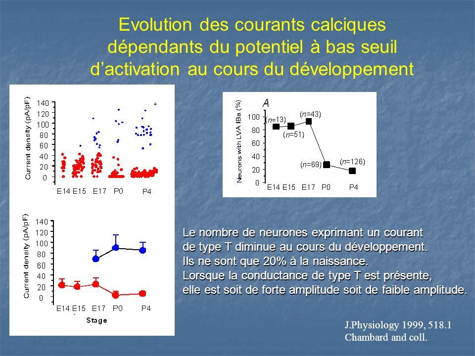 Evolution des courants calciques dépendants du potentiel à bas seuil d'activation au cours du développement