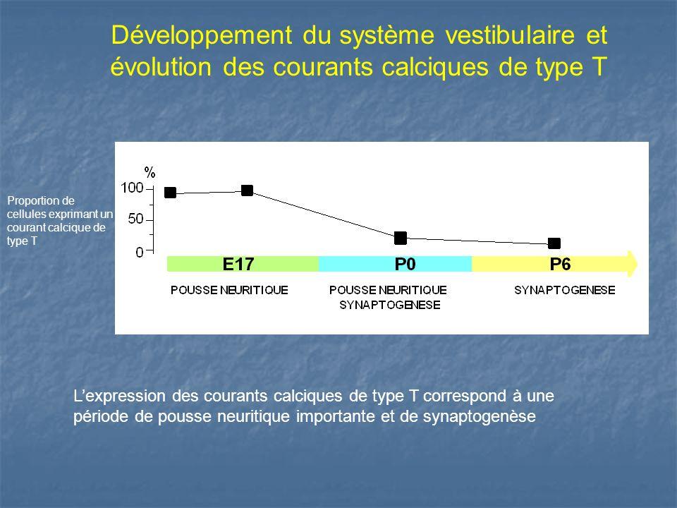 Développement du système vestibulaire et évolution des courants calciques de type T