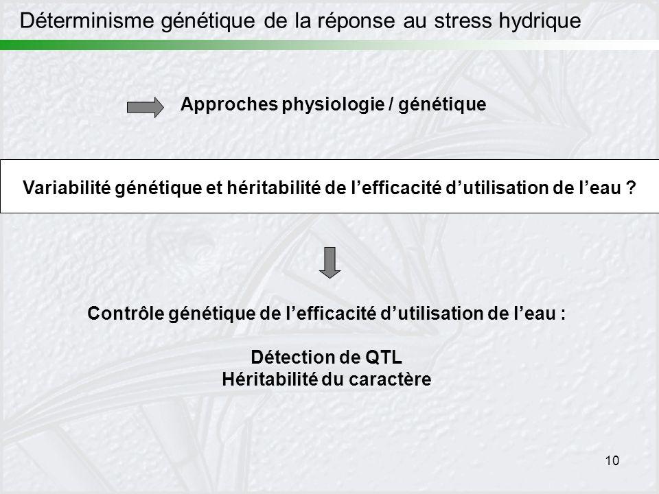 Déterminisme génétique de la réponse au stress hydrique