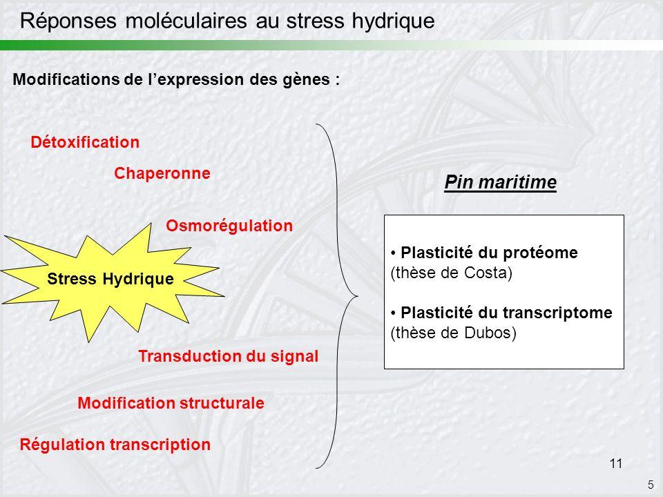 Réponses moléculaires au stress hydrique