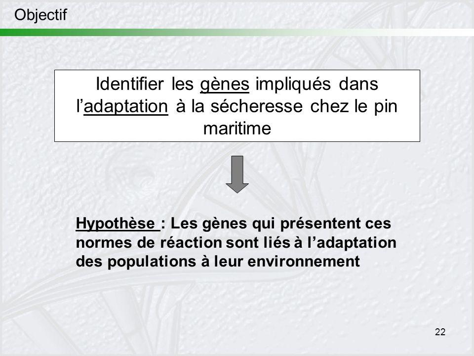 Objectif Identifier les gènes impliqués dans l'adaptation à la sécheresse chez le pin maritime.