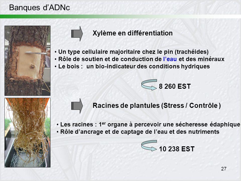 Banques d'ADNc Xylème en différentiation 8 260 EST