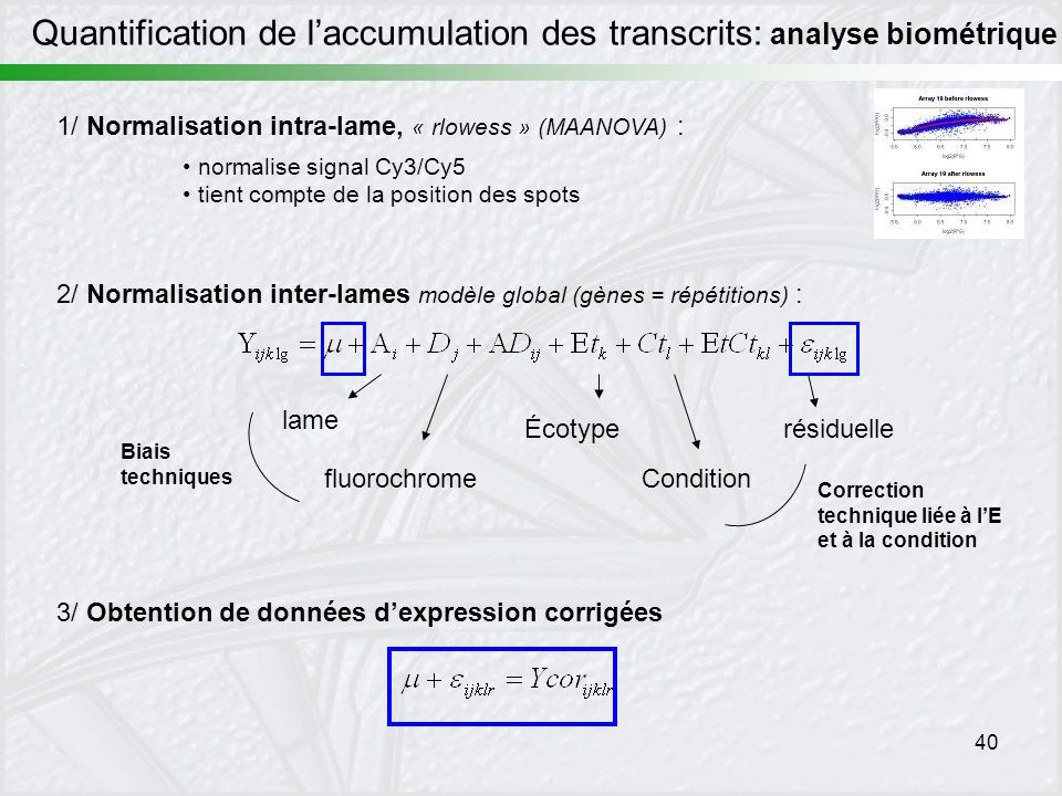 Quantification de l'accumulation des transcrits: analyse biométrique