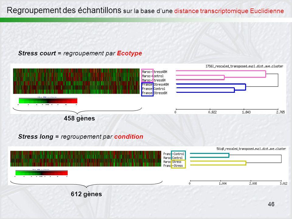 Regroupement des échantillons sur la base d'une distance transcriptomique Euclidienne