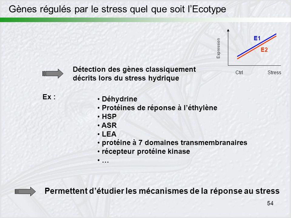 Gènes régulés par le stress quel que soit l'Ecotype