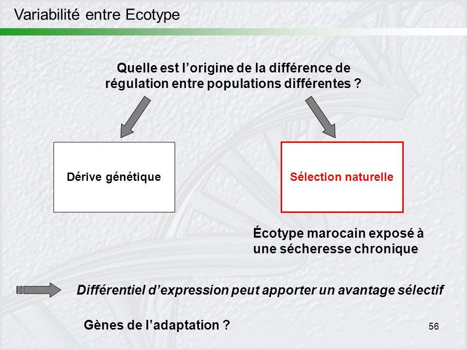 Variabilité entre Ecotype