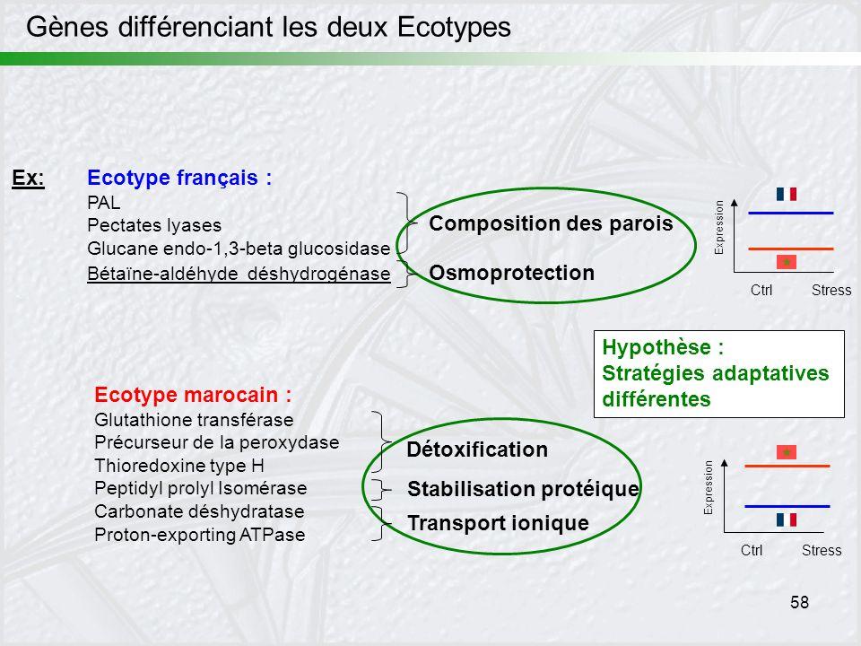 Gènes différenciant les deux Ecotypes