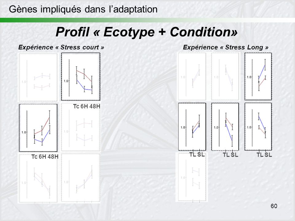 Profil « Ecotype + Condition»