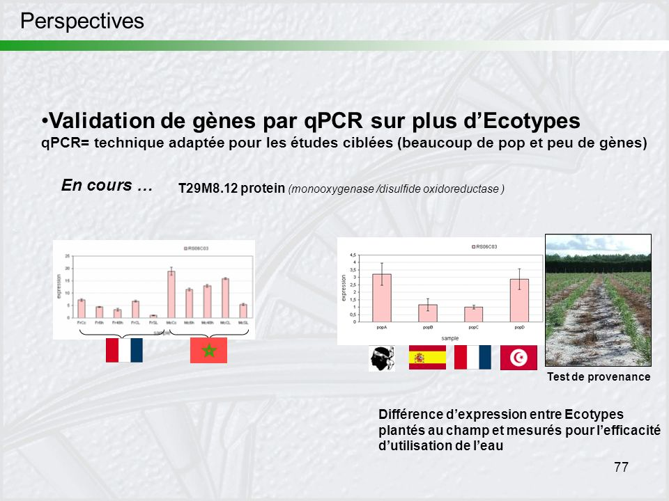 Validation de gènes par qPCR sur plus d'Ecotypes