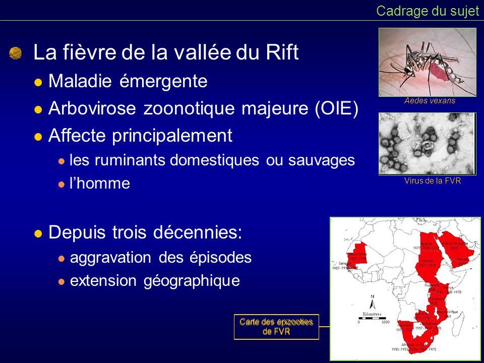 La fièvre de la vallée du Rift