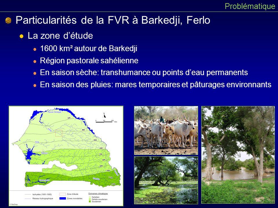 Particularités de la FVR à Barkedji, Ferlo