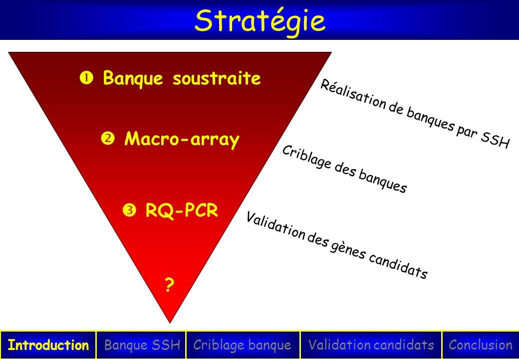 Stratégie  Banque soustraite  Macro-array  RQ-PCR