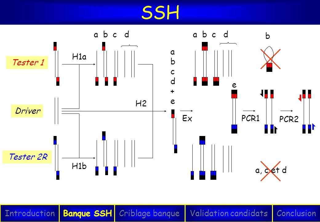 SSH H1a a b c d Ex a b c d e PCR1 a, c et d b Tester 1 Tester 2R