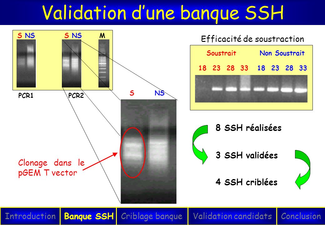 Validation d'une banque SSH