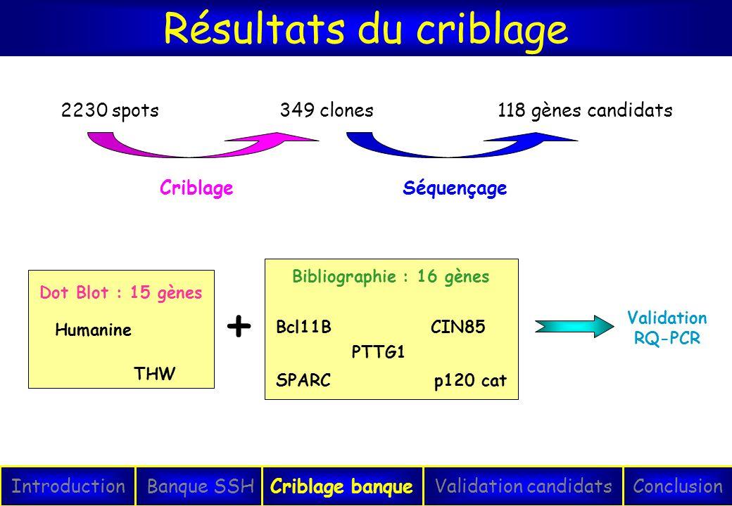+ Résultats du criblage 2230 spots 349 clones Criblage