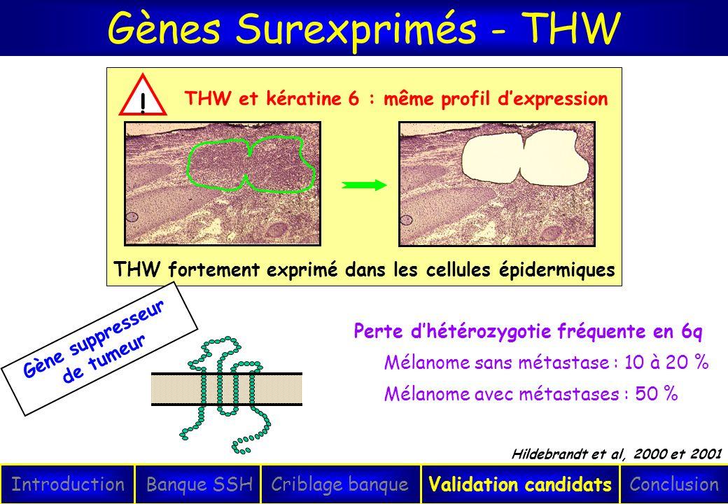 Gènes Surexprimés - THW