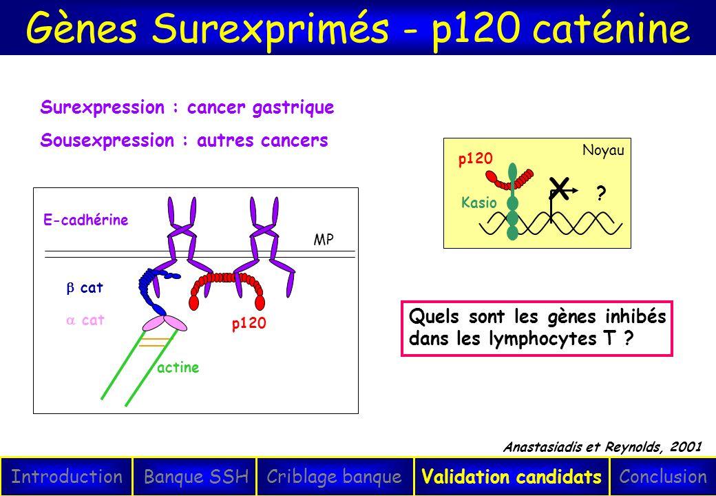 Gènes Surexprimés - p120 caténine