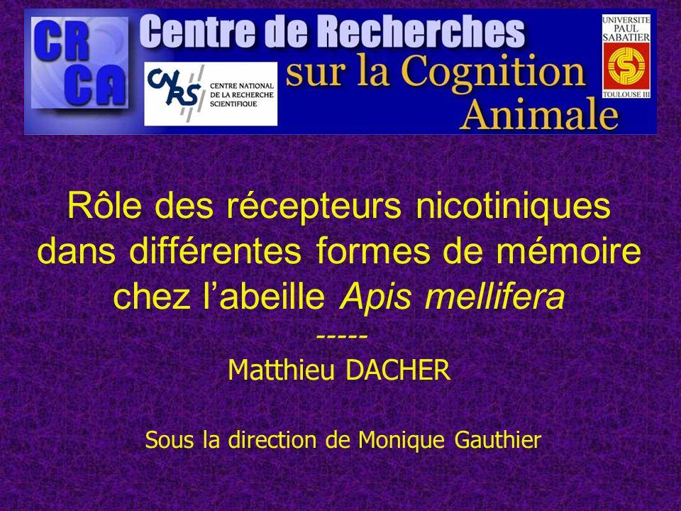 Rôle des récepteurs nicotiniques dans différentes formes de mémoire chez l'abeille Apis mellifera ----- Matthieu DACHER Sous la direction de Monique Gauthier