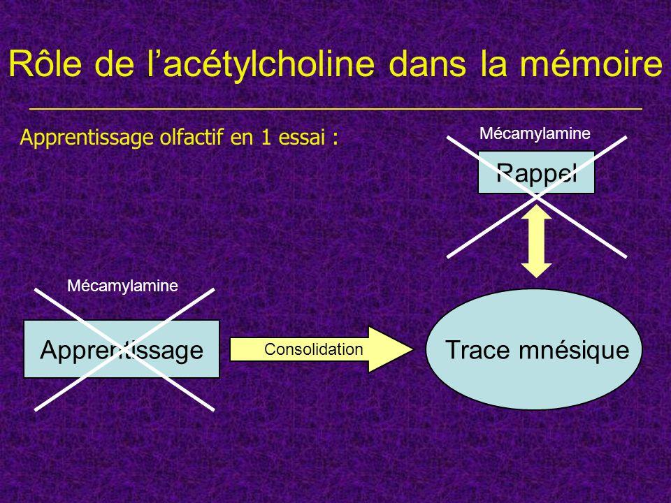 Rôle de l'acétylcholine dans la mémoire