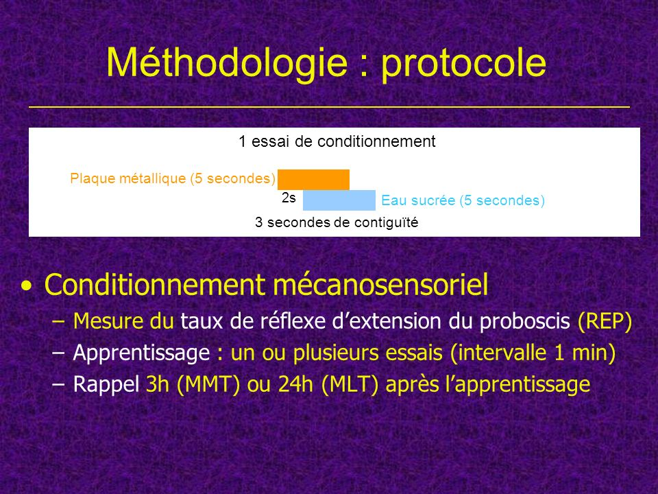 Méthodologie : protocole