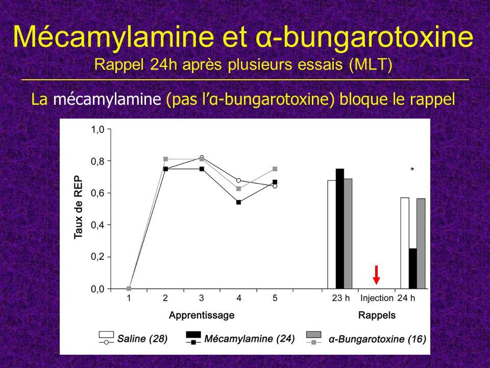 La mécamylamine (pas l'α-bungarotoxine) bloque le rappel