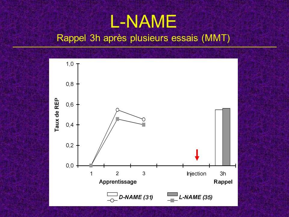 L-NAME Rappel 3h après plusieurs essais (MMT)