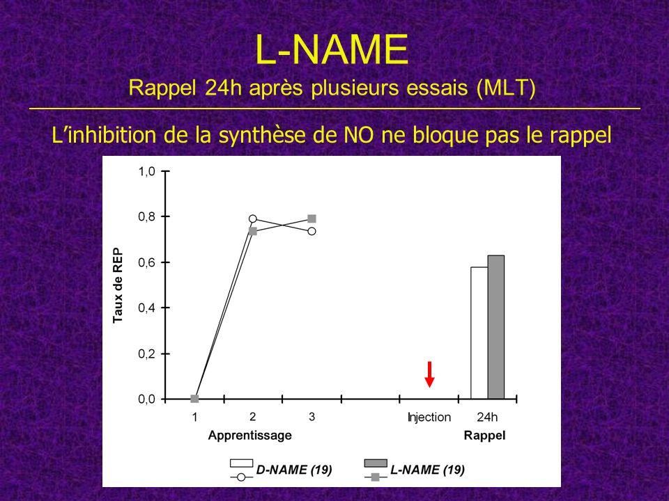 L-NAME Rappel 24h après plusieurs essais (MLT)