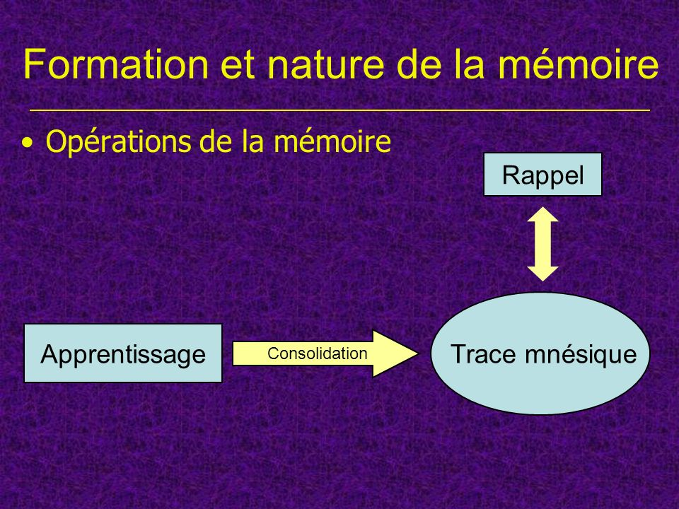 Formation et nature de la mémoire