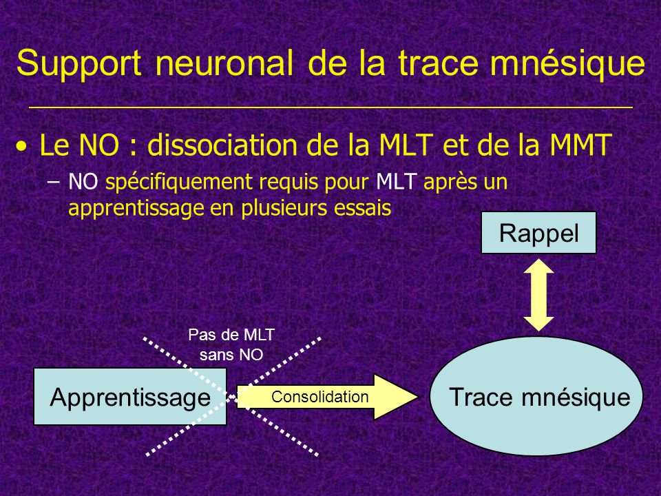 Support neuronal de la trace mnésique