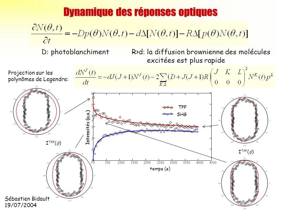 Dynamique des réponses optiques