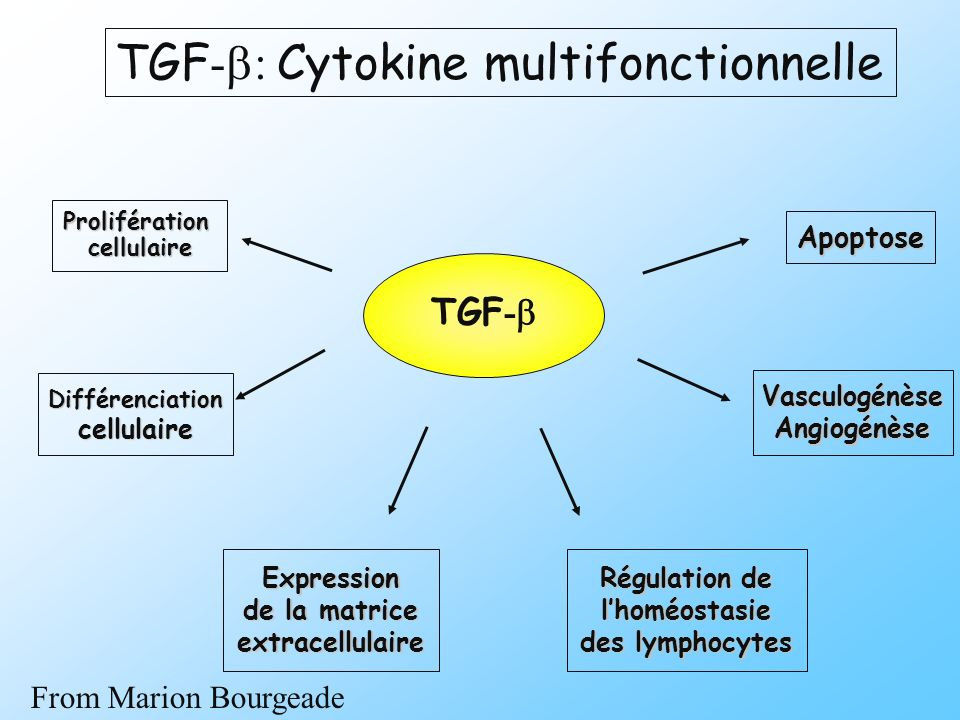 TGF-b: Cytokine multifonctionnelle