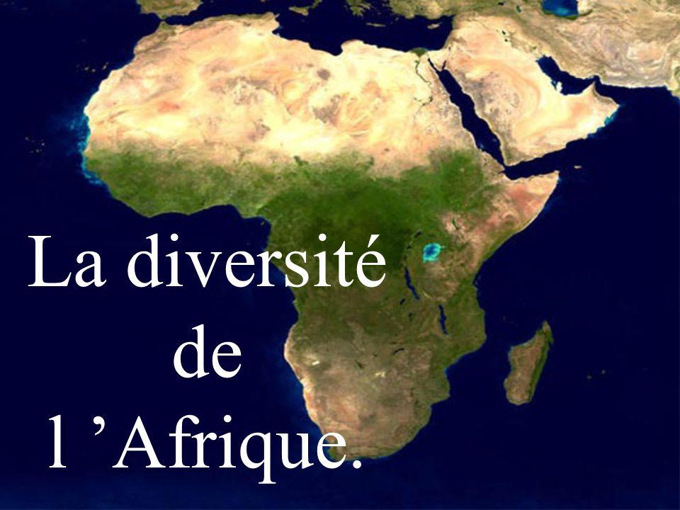 La diversité de l 'Afrique.