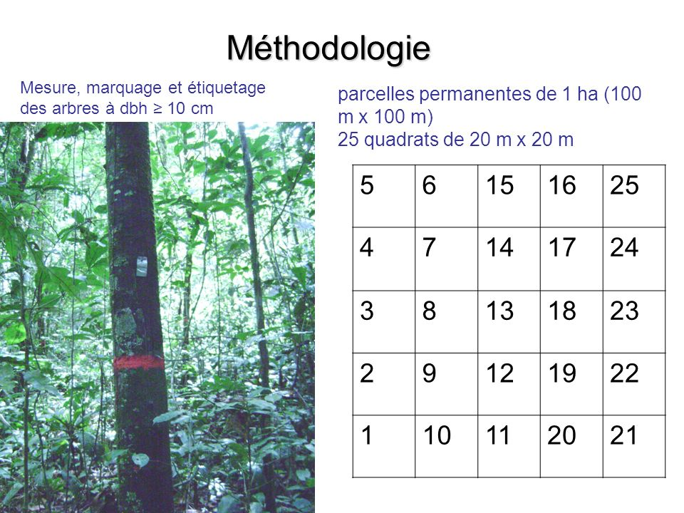 Méthodologie Mesure, marquage et étiquetage des arbres à dbh ≥ 10 cm. parcelles permanentes de 1 ha (100 m x 100 m)