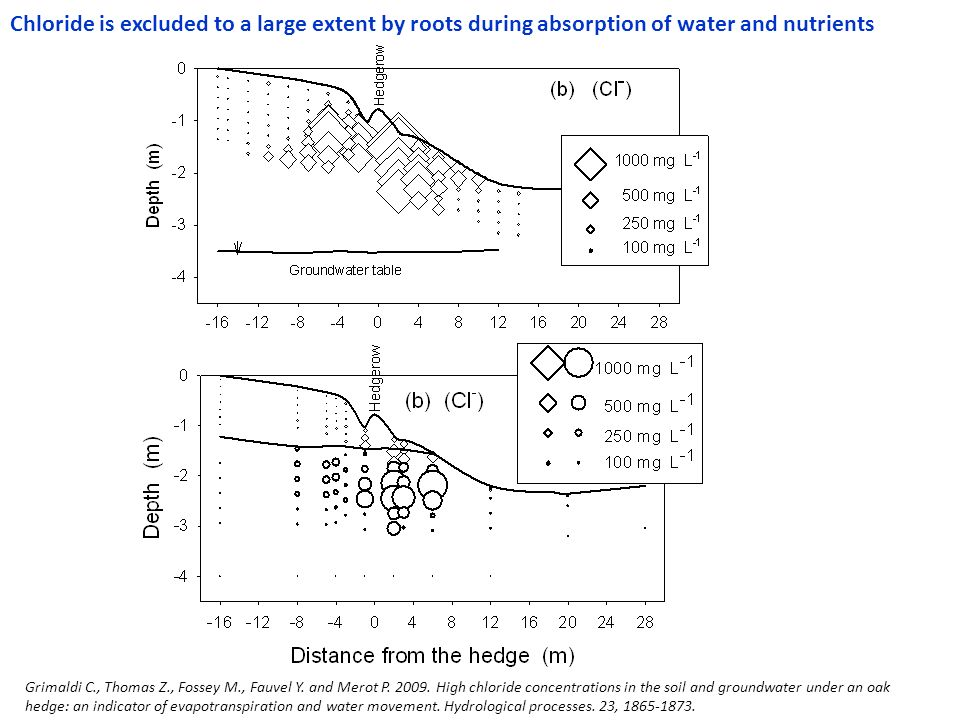 Chloride is excluded to a large extent by roots during absorption of water and nutrients