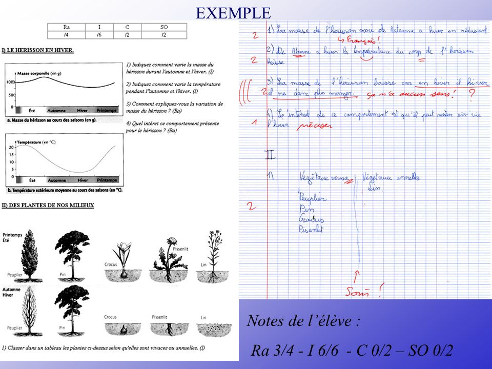 EXEMPLE Notes de l'élève : Ra 3/4 - I 6/6 - C 0/2 – SO 0/2 NB: