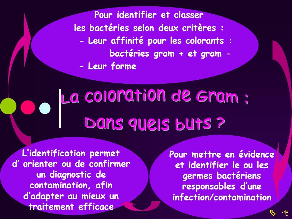 La coloration de Gram : Dans quels buts Pour identifier et classer