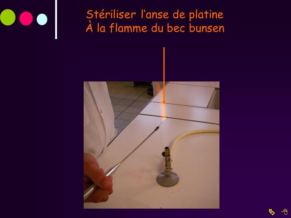 Stériliser l'anse de platine À la flamme du bec bunsen
