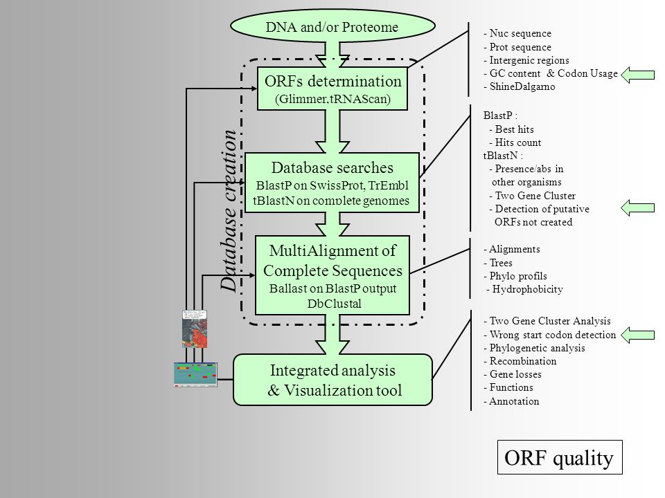 Database creation ORF quality ORFs determination Database searches