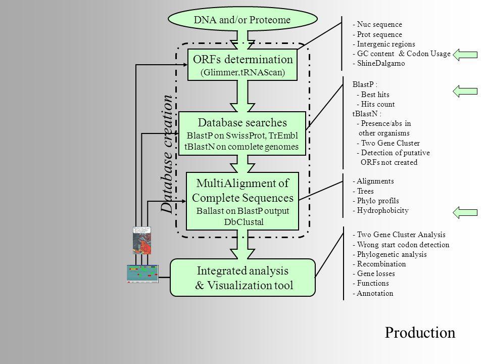 Database creation Production ORFs determination Database searches