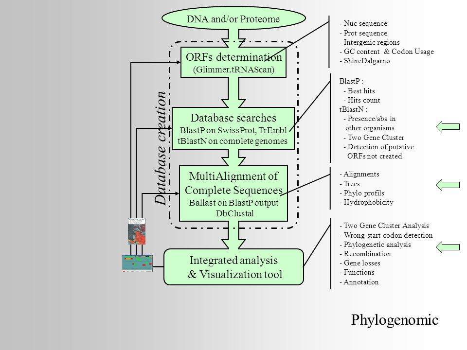 Database creation Phylogenomic ORFs determination Database searches