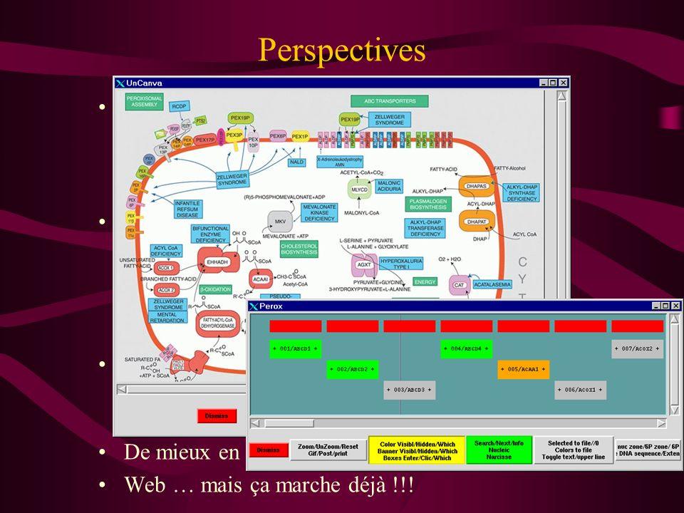 Perspectives Eucaryotes supérieurs
